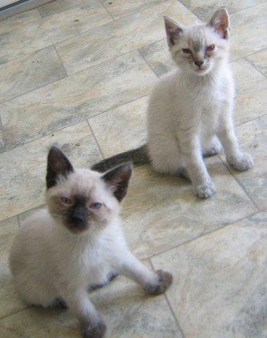 MC-and-KittensJune13-07 063